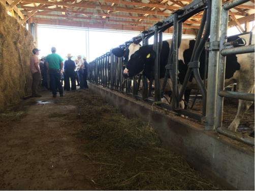 Diverse Communities in Dairy Farming