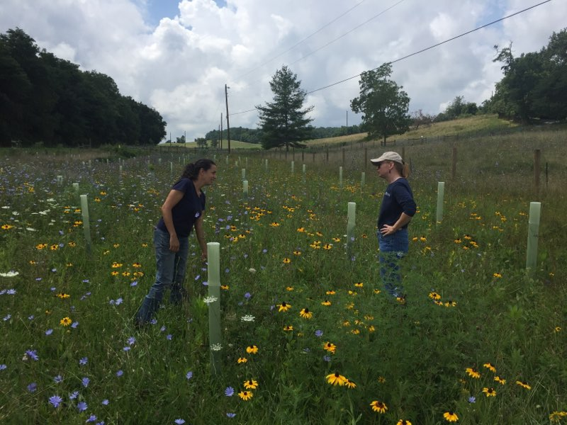 Two women in conversation standing in a field of wildflowers and tree tubes.