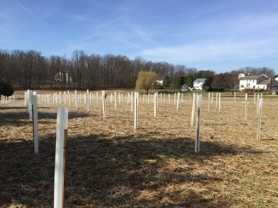 A landscape photo of rows of trees tubed and staked in a field in Prince George's County. Family-sized homes are in the background.
