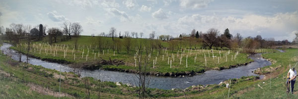 A panoramic photograph of a freshly planted riparian forest buffer.