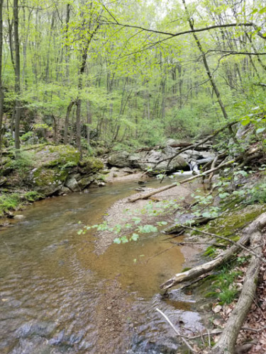 A photograph of a forested stream.